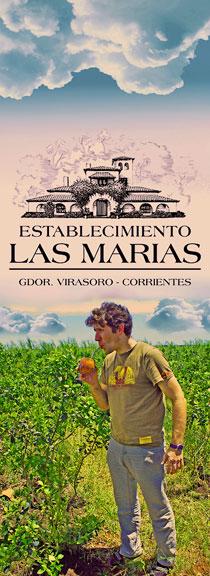 LAS_MARIAS_logo_plantacja_szef