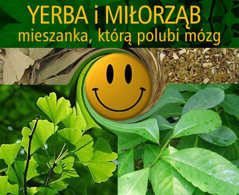 MILORZAB_I_YERBA_MATE